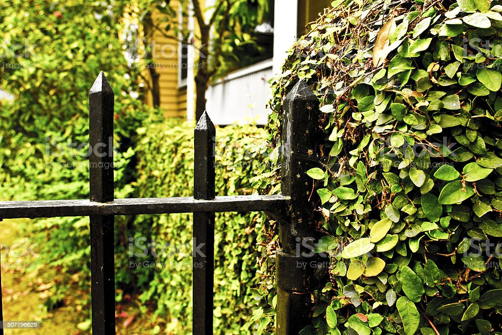 Gate and ivy covered wall stock photo