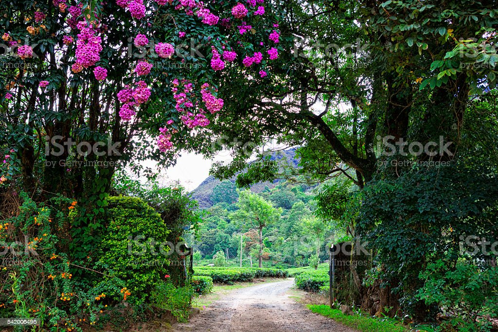 Gate at Tea Plantation in the Western Ghats, India stock photo