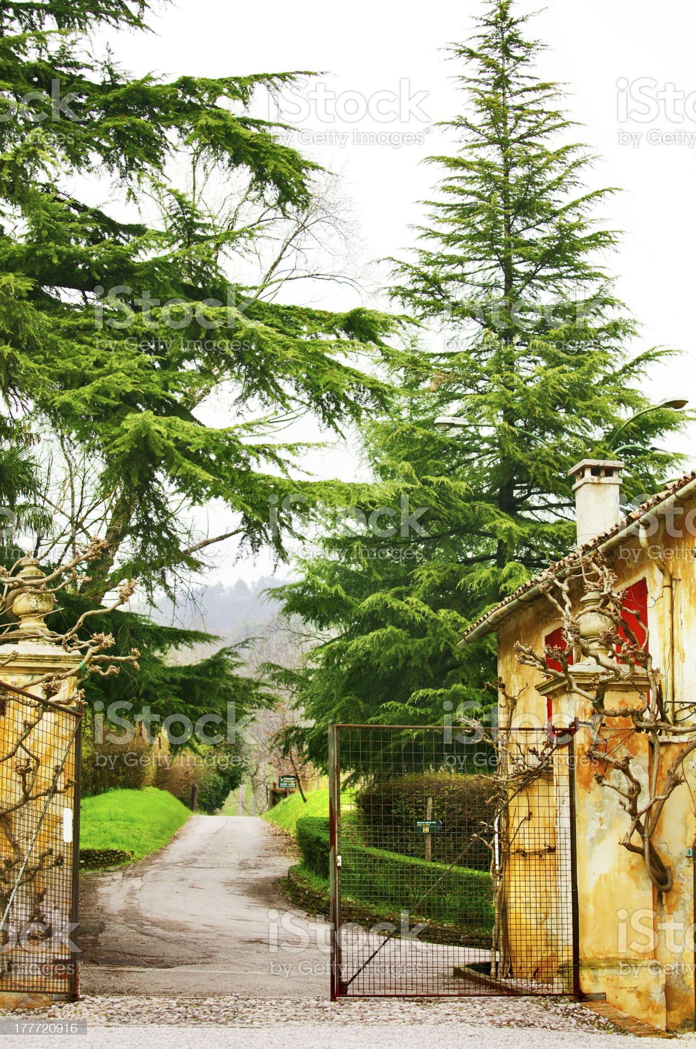 gate to the park with big firtree royalty-free stock photo