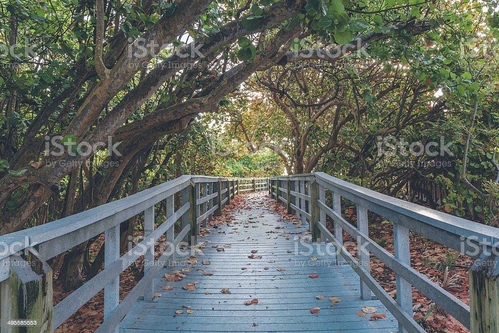 Gateway Across the Mangrove stock photo
