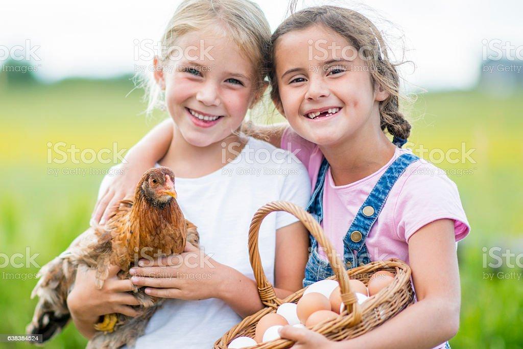 Gathering Eggs on the Farm stock photo