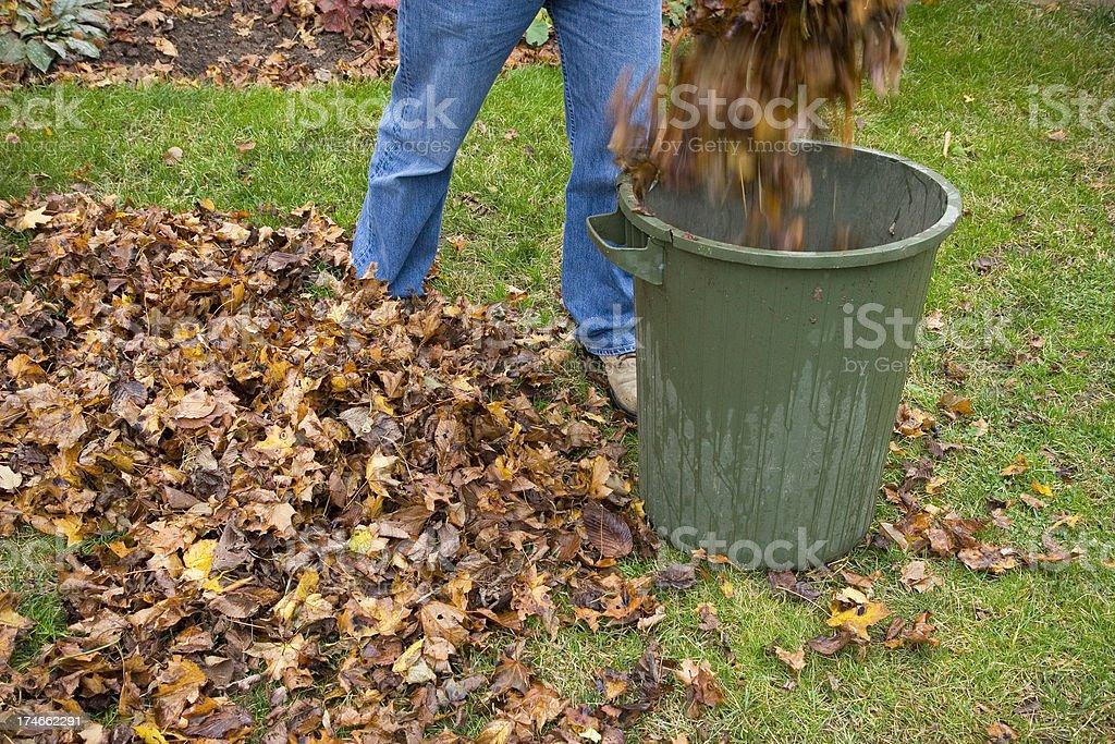 Gathering Leaves stock photo