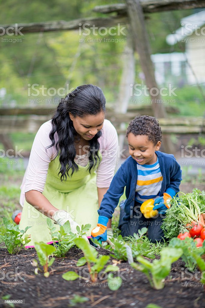 Gathering Vegetables From the Garden stock photo