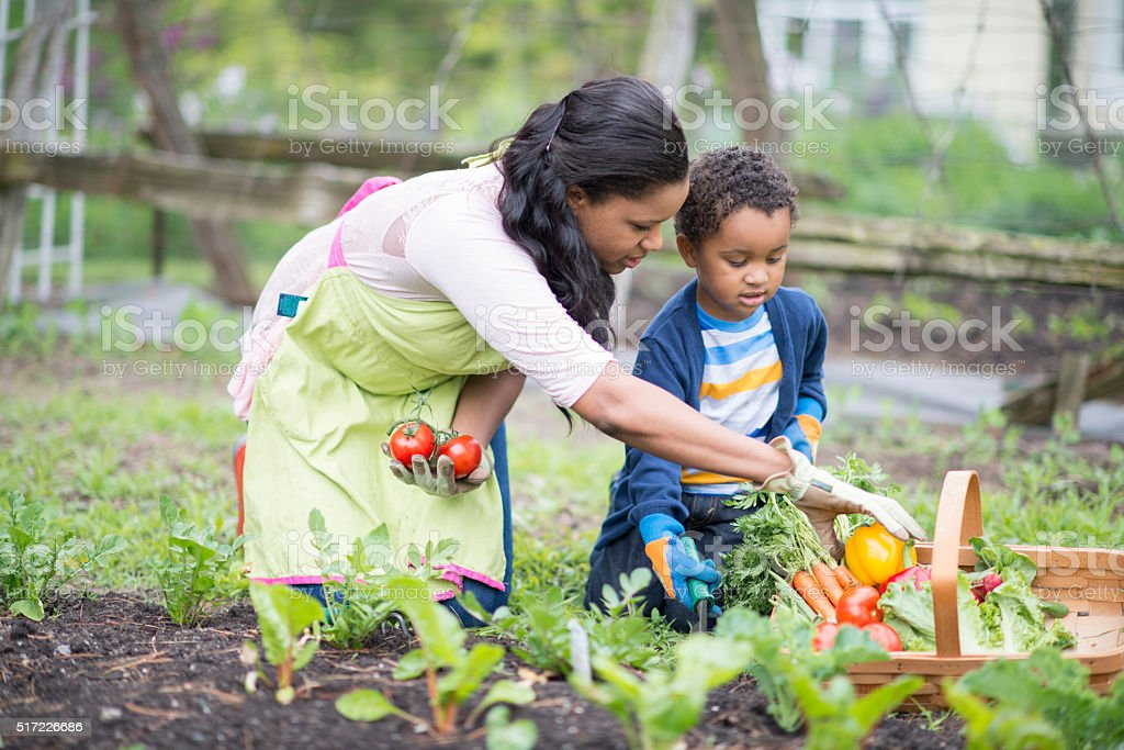 Gathering Vegetables Together stock photo