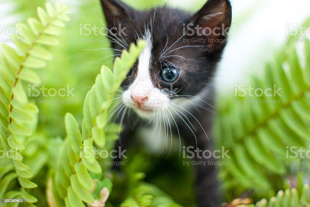gatito escondido stock photo
