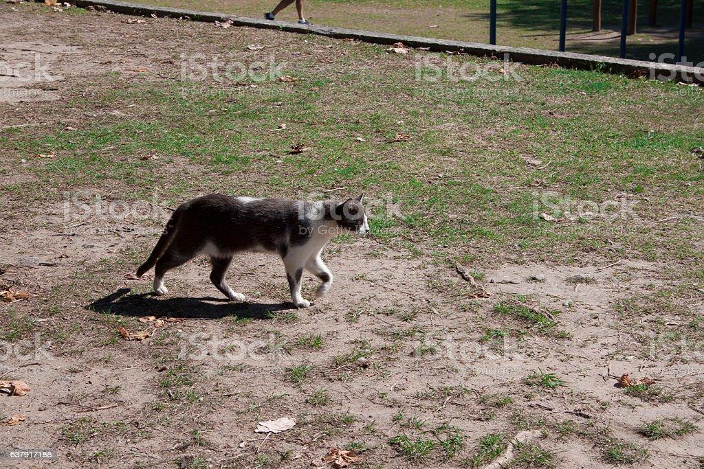 Gato caça no Aterro do Flamengo stock photo