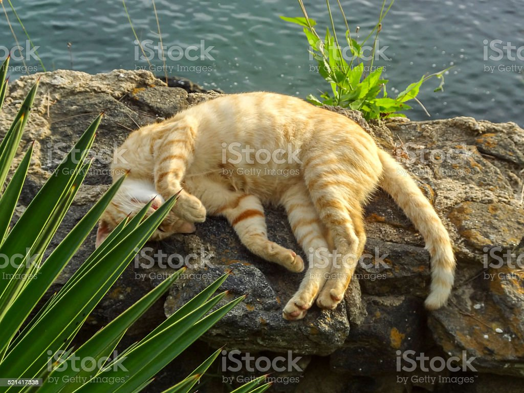 Gato dormindo stock photo