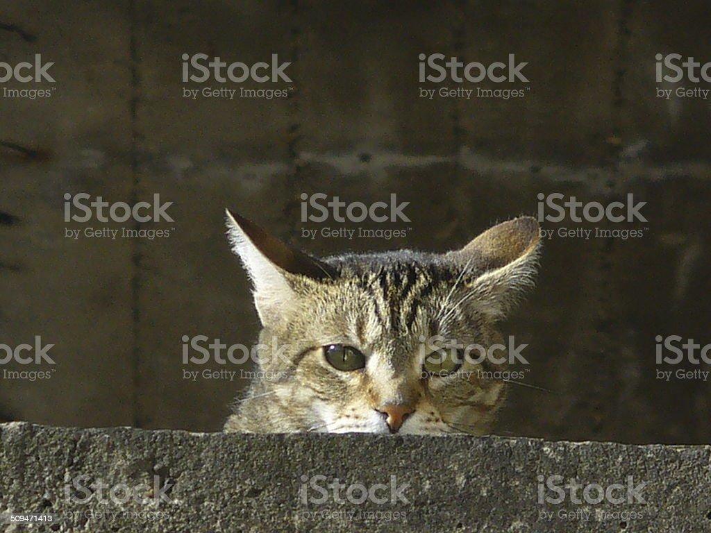 Gato escondido stock photo