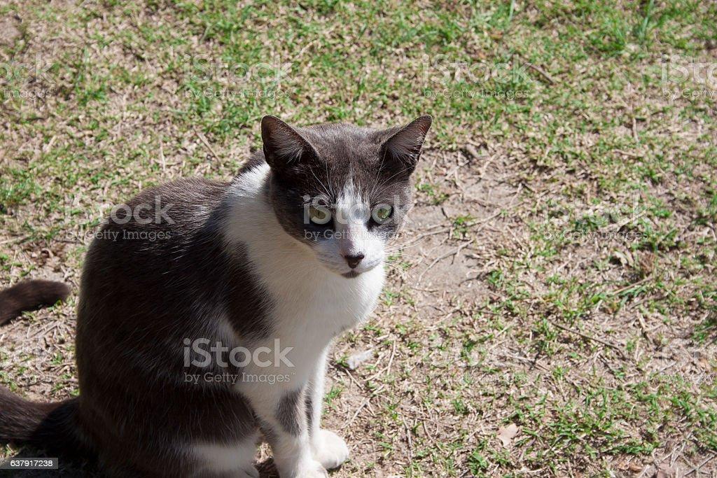 Gato no gramado stock photo