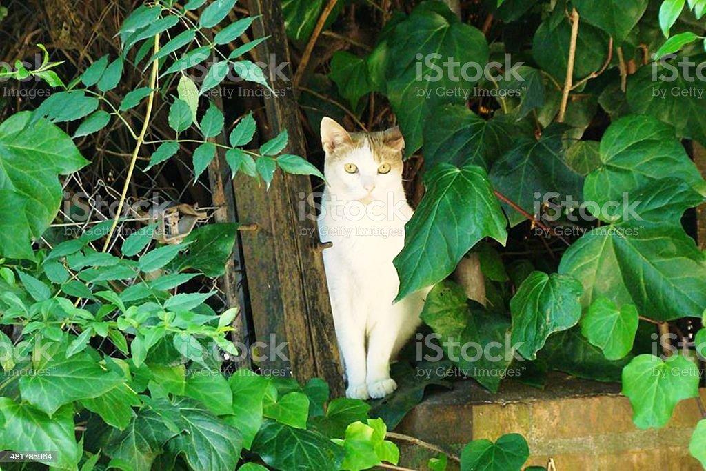 gato foto de stock libre de derechos