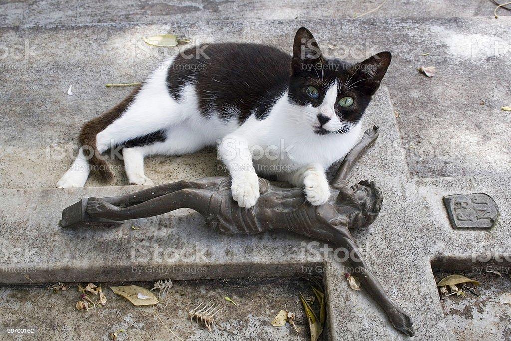 Gato stock photo