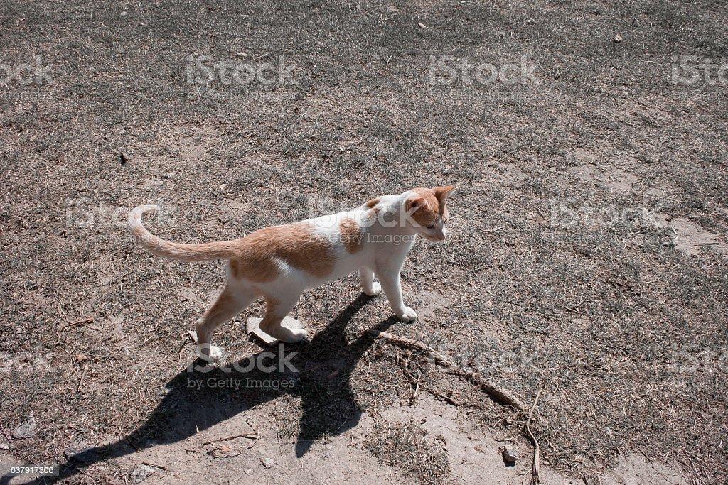 Gato solitário stock photo