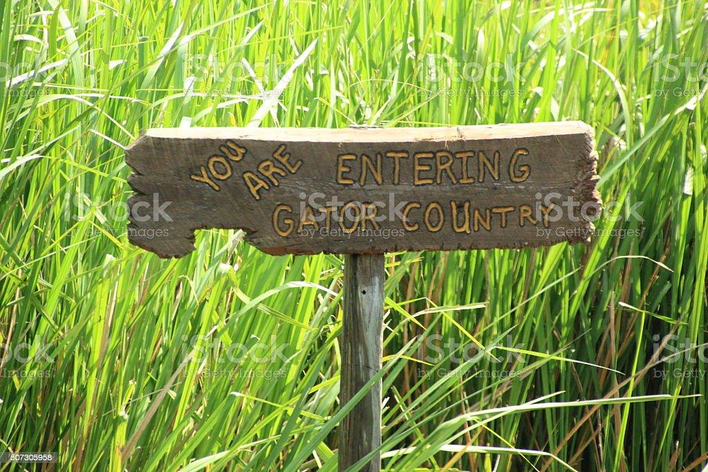 gator country stock photo