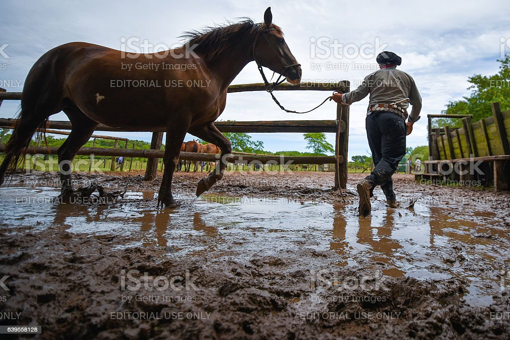 Gaucho leading a horse in a paddock stock photo