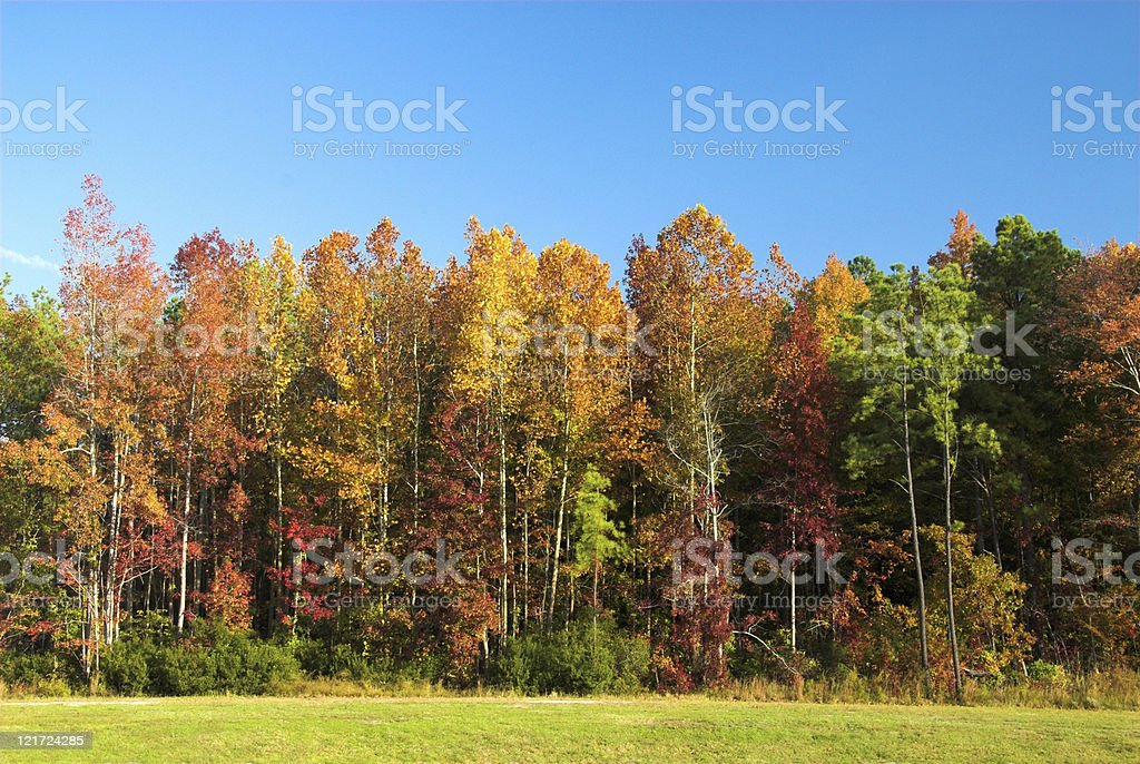 Gaudy Autumn Trees royalty-free stock photo