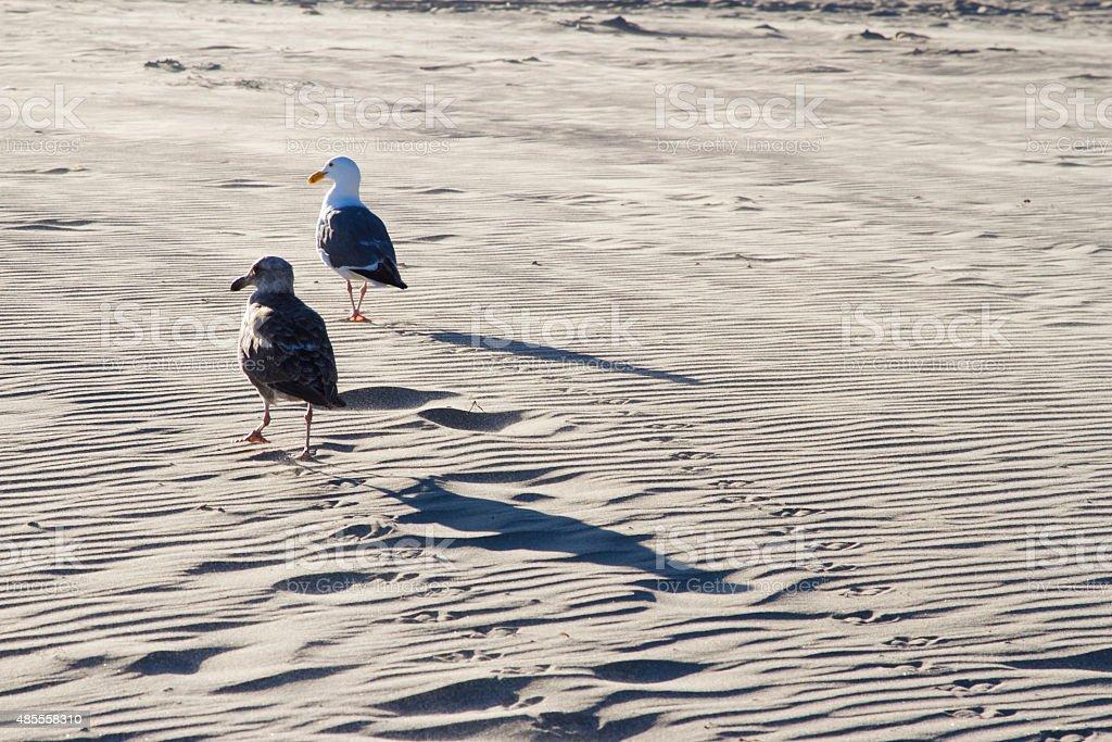 Gaviota en la playa zbiór zdjęć royalty-free
