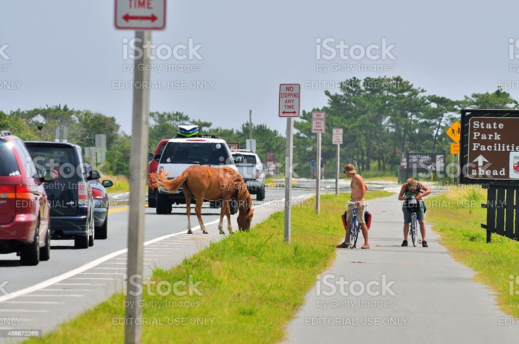 Gawkers Viewing Assateague Pony royalty-free stock photo