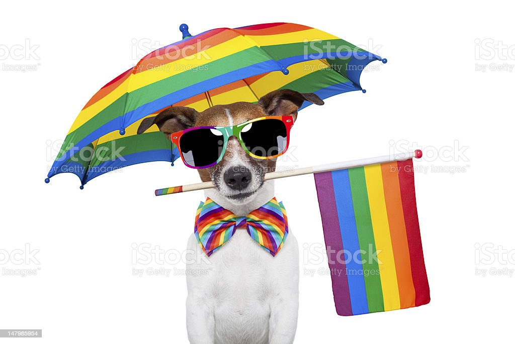 gay dog royalty-free stock photo