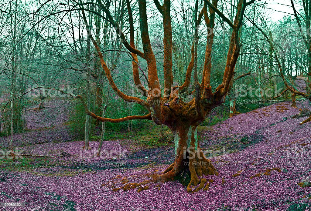 Gay tree, multicolor forest stock photo