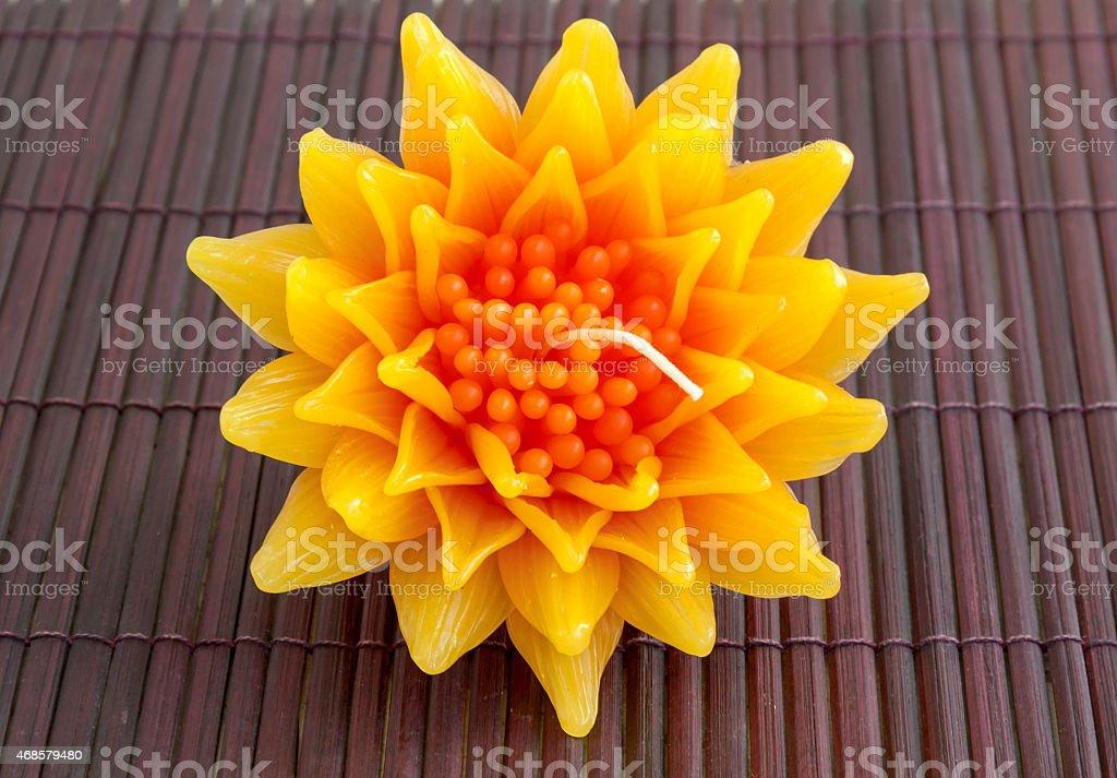 Gazania candle flower on wood background royalty-free stock photo