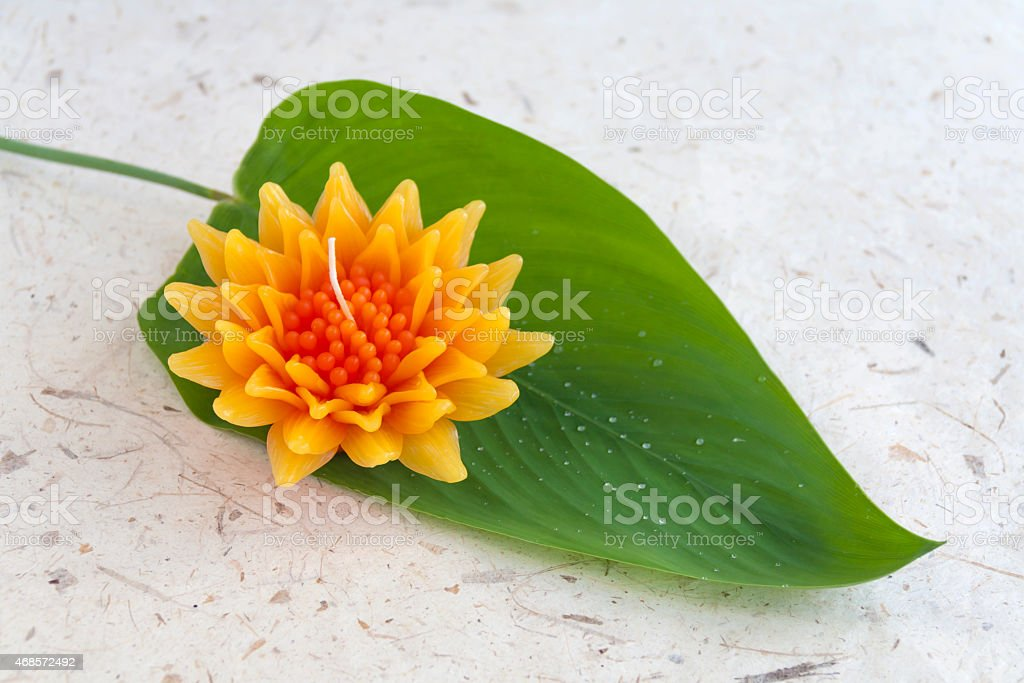 Gazania flower with green leaf royalty-free stock photo