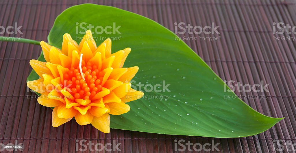 Gazania flower with green leaf royalty-free stock photo