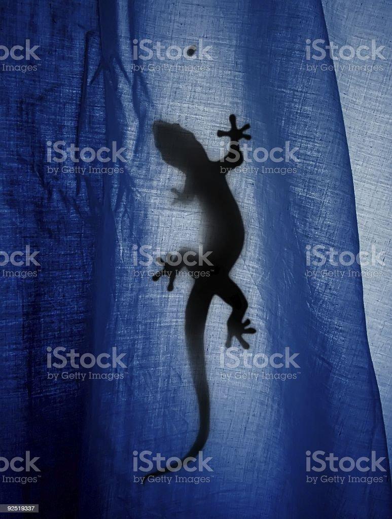 Gecko Heaven royalty-free stock photo