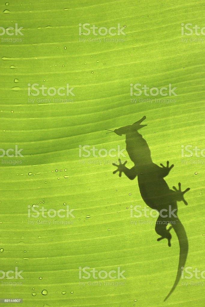Gecko Silhouette royalty-free stock photo