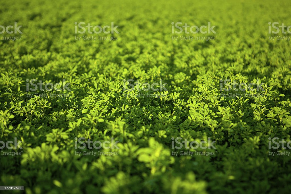 geen field stock photo