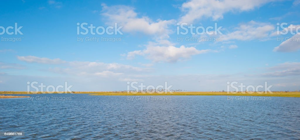 Geese flying along the shore of a lake stock photo