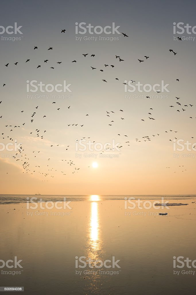 Geese flying in a sunset over tidal sandflats stock photo
