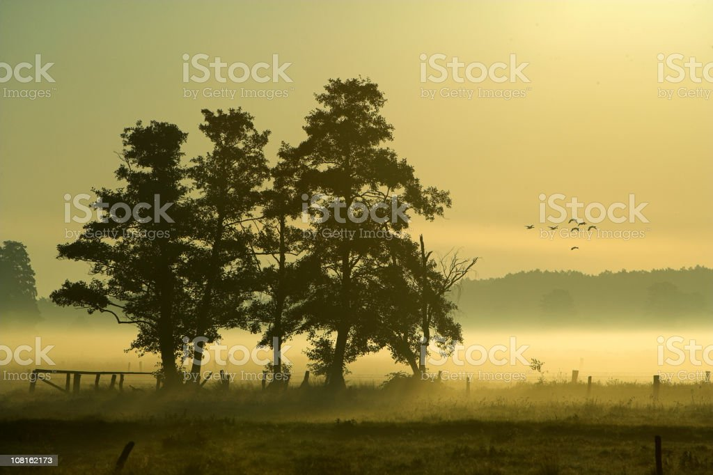 Geese Flying Over Foggy Wetlands Countryside royalty-free stock photo