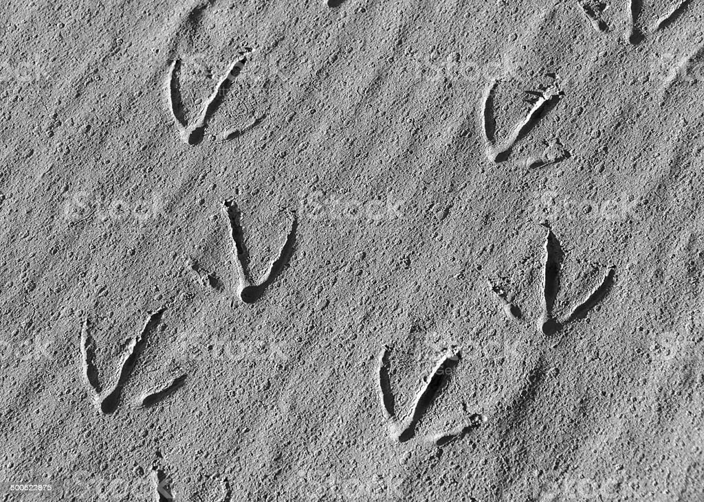 Geese Footprints in Silt stock photo