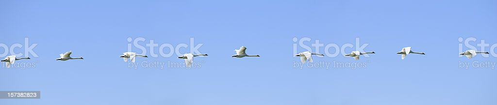 Geese in a row on blue sky. royalty-free stock photo