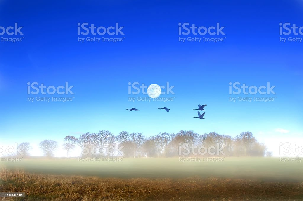 Geese in Flight Over Marden Thorn in Kent stock photo