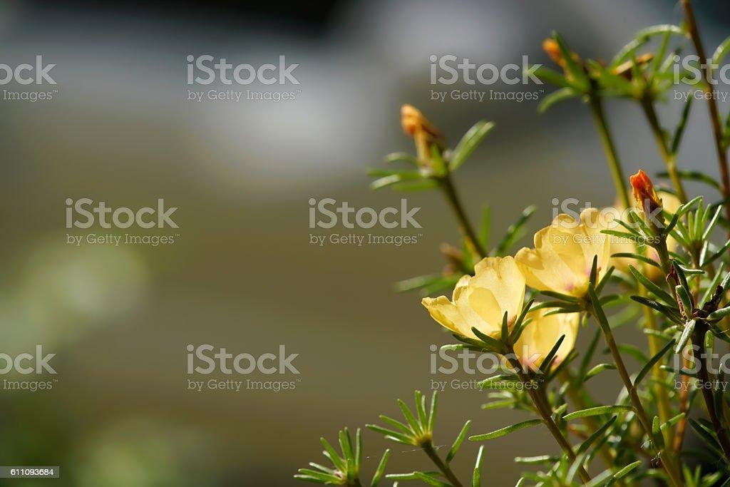 gelbe Blüten stock photo