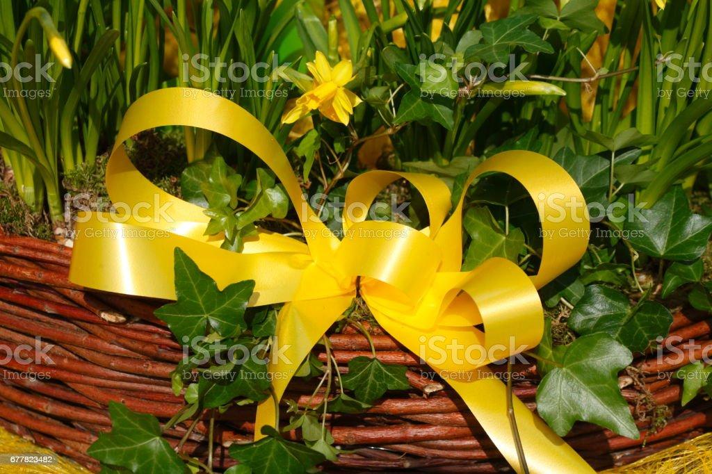Gelbe Schleife an einem Korb stock photo