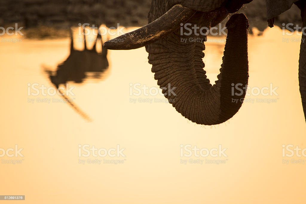 Gemsbon ( Oryx ) at a water hole. stock photo