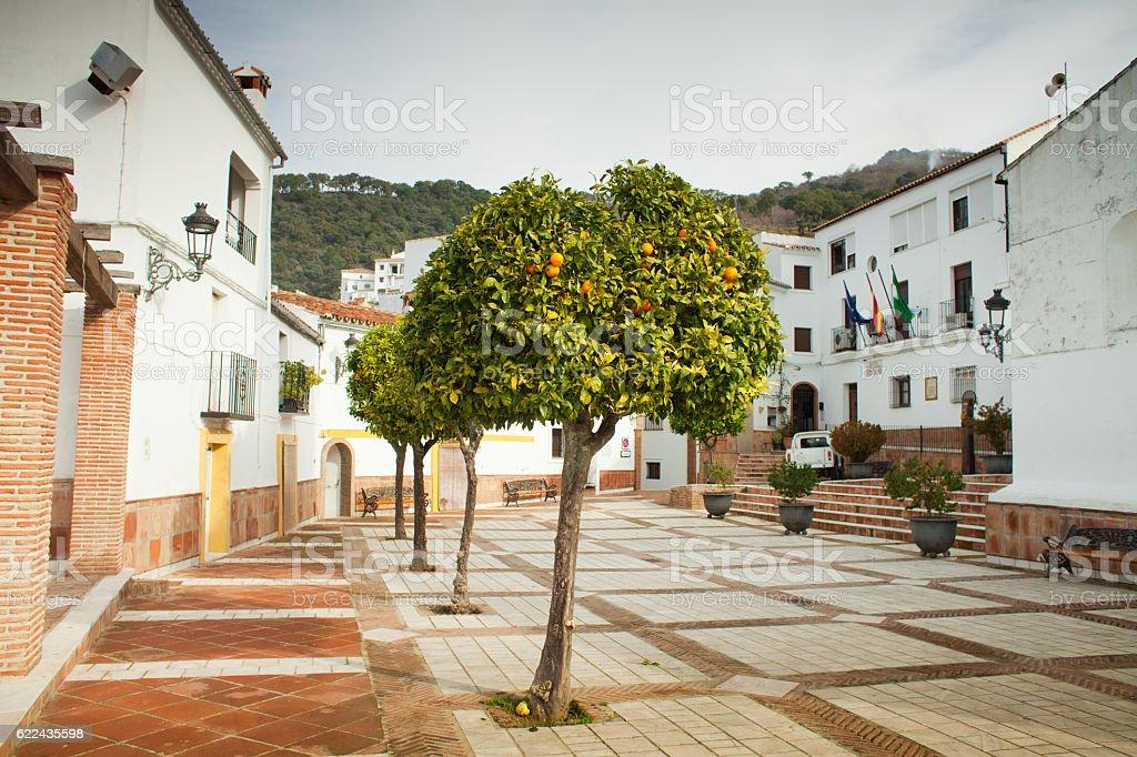 Genalguacil  -  orange tree stock photo