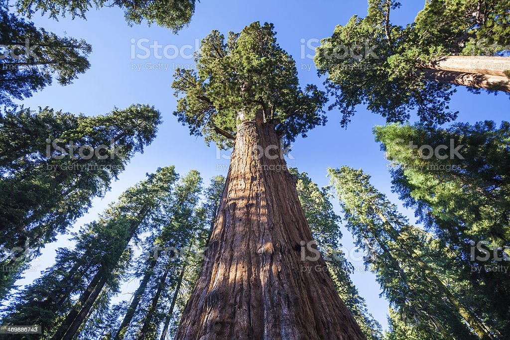 General Sherman Tree in Sequoia National Park stock photo