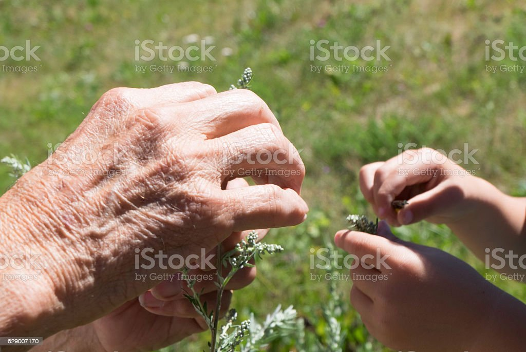 generations at work royalty-free stock photo