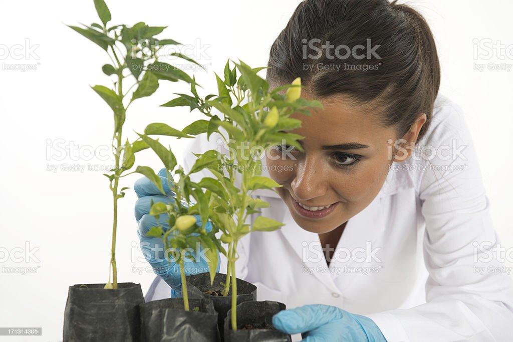 genetic laboratory stock photo
