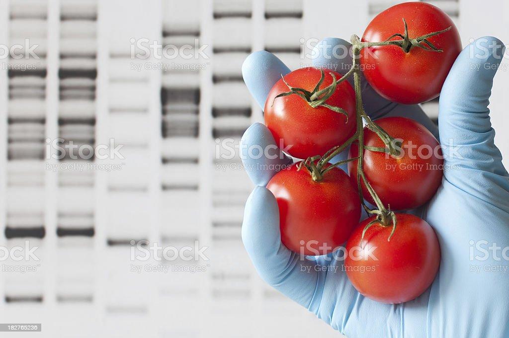 Genetic modification royalty-free stock photo