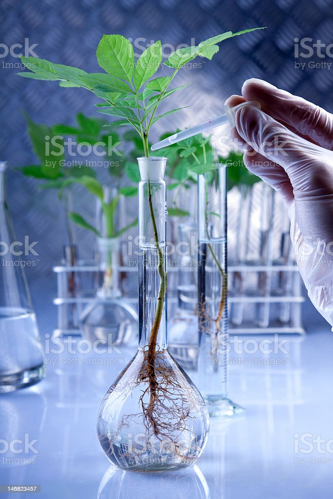 genetic modifications royalty-free stock photo