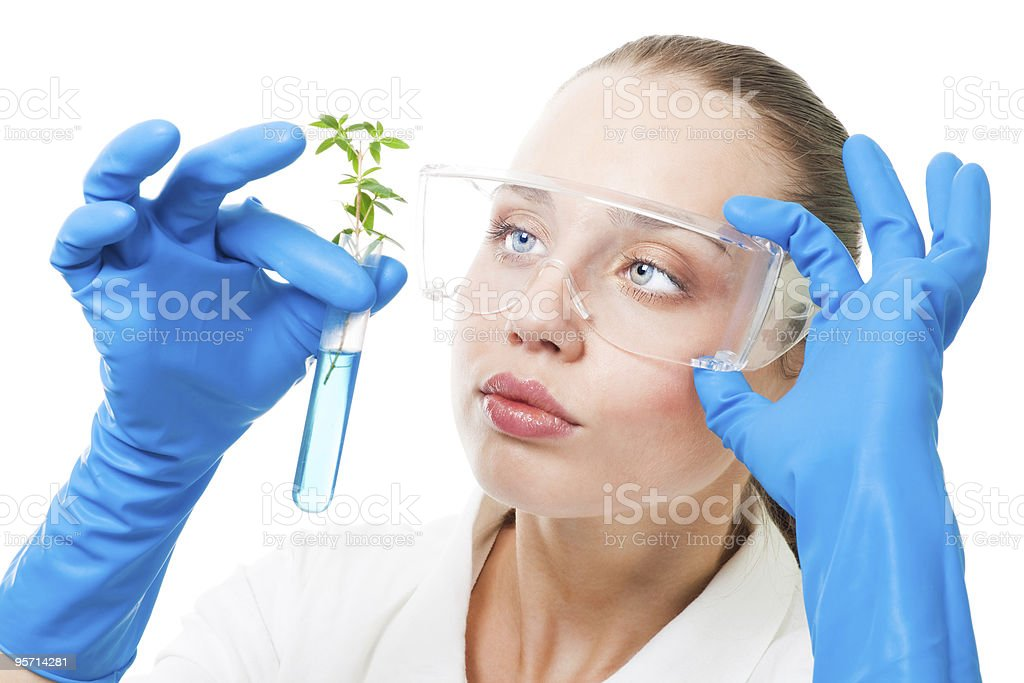 genetic modified plant royalty-free stock photo