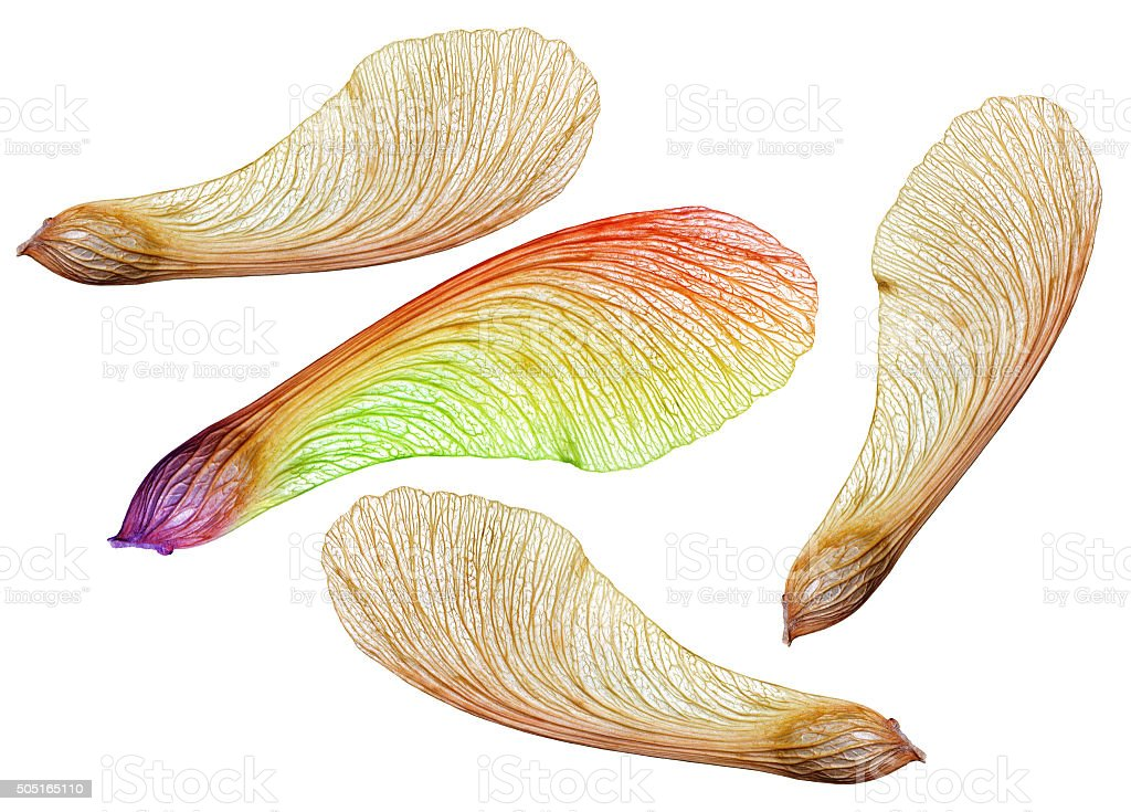 Genetic mutation and natural selection in nature concept stock photo
