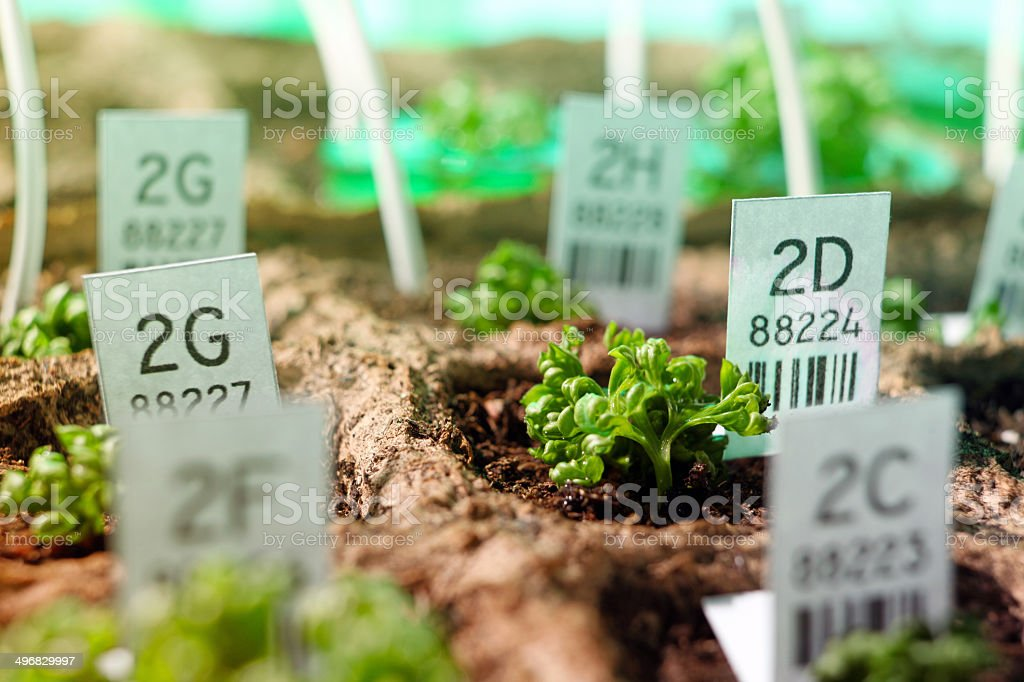 Genetic research: plants and seeds, biotechnology laboratory stock photo