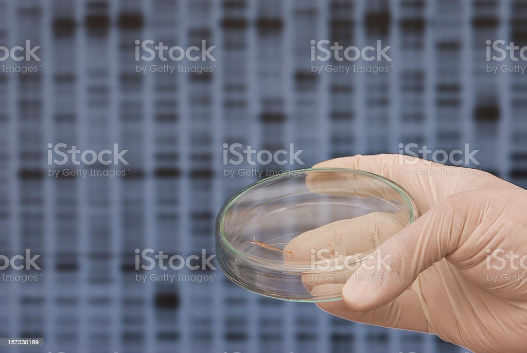 Genetic Rsearch royalty-free stock photo