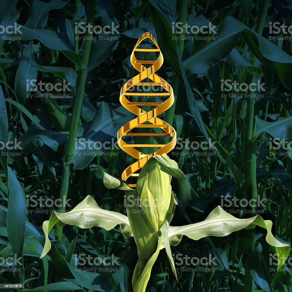 Genetically Modified Crops stock photo