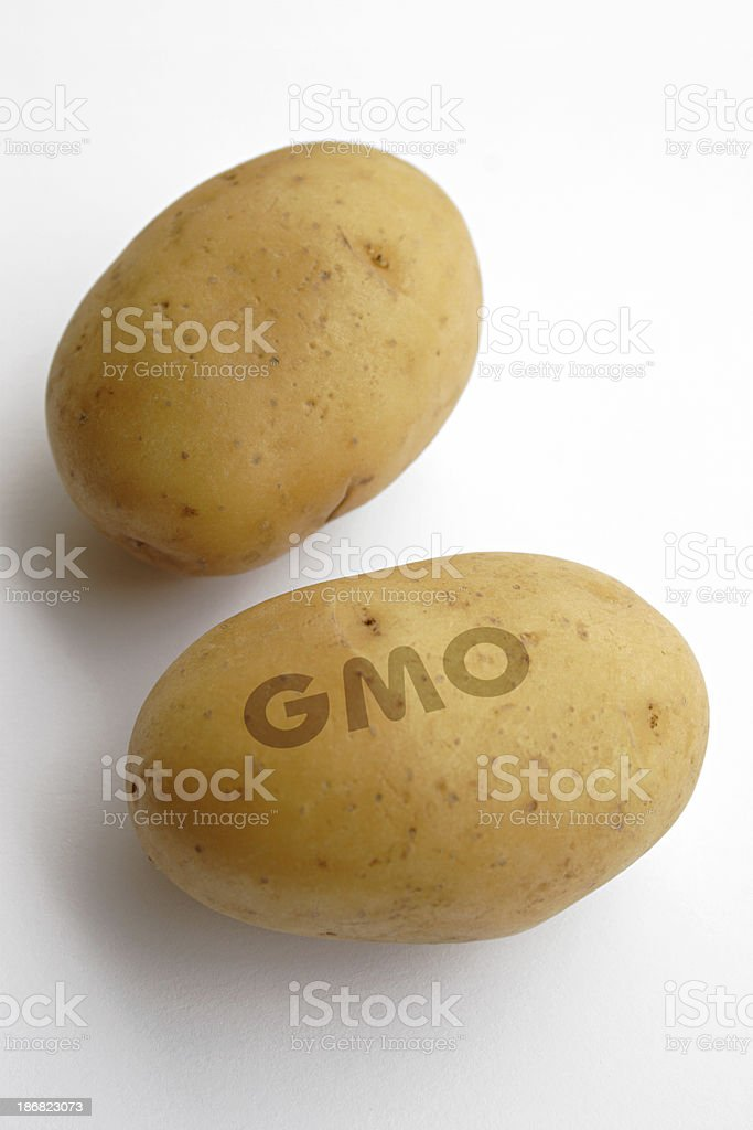Genetically modified organism royalty-free stock photo